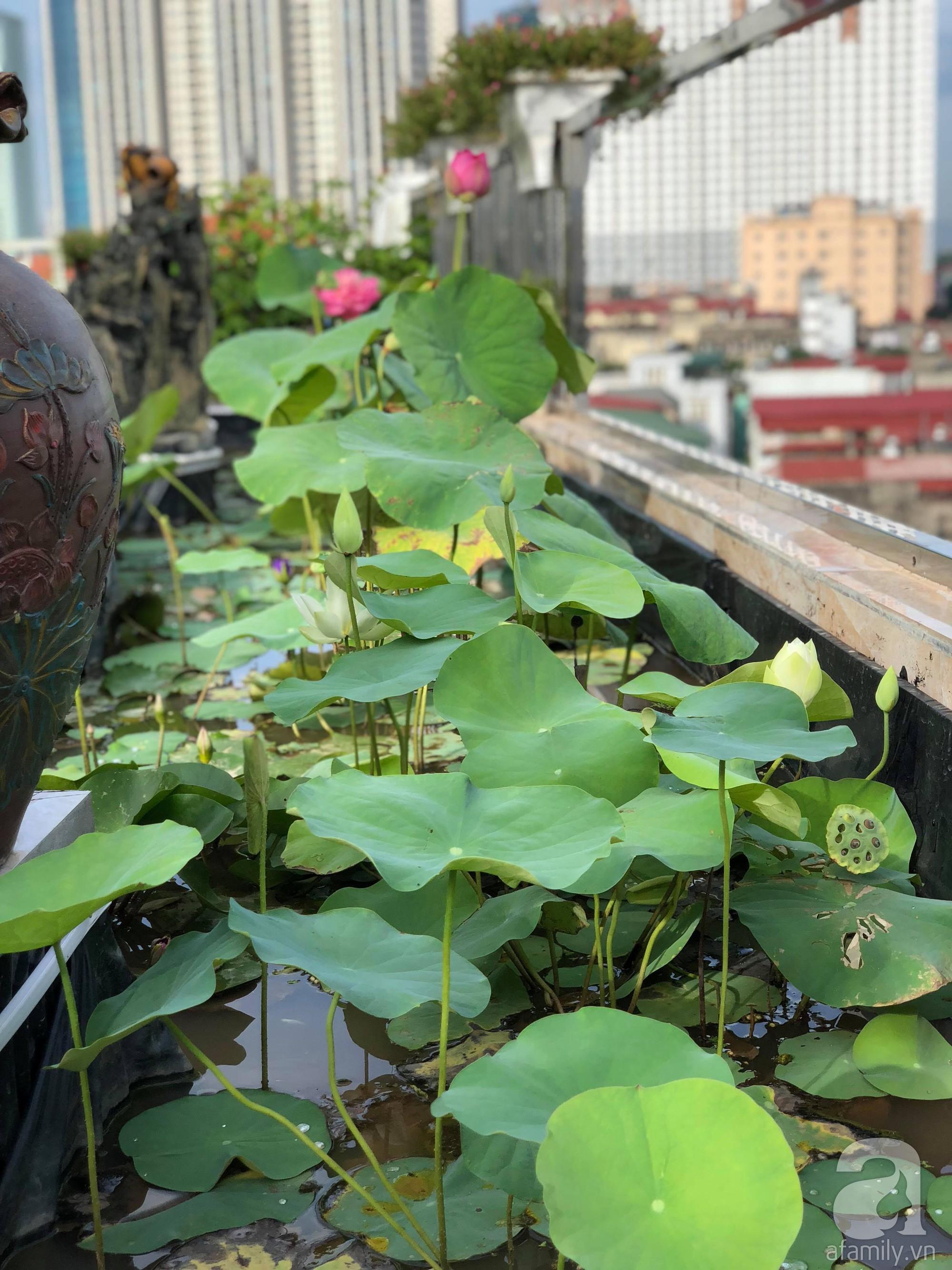 Khu vườn trên sân thượng rộng 200m² đẹp ngỡ ngàng với trăm loài hoa đua nhau khoe sắc ở Hà Nội - 25