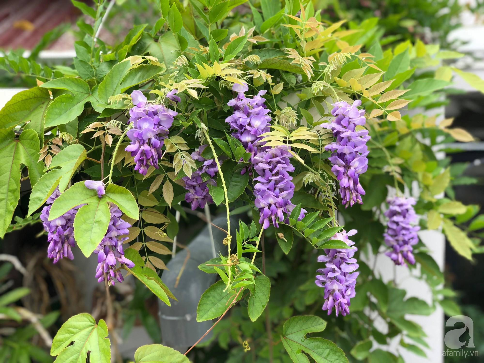 Khu vườn trên sân thượng rộng 200m² đẹp ngỡ ngàng với trăm loài hoa đua nhau khoe sắc ở Hà Nội - 27