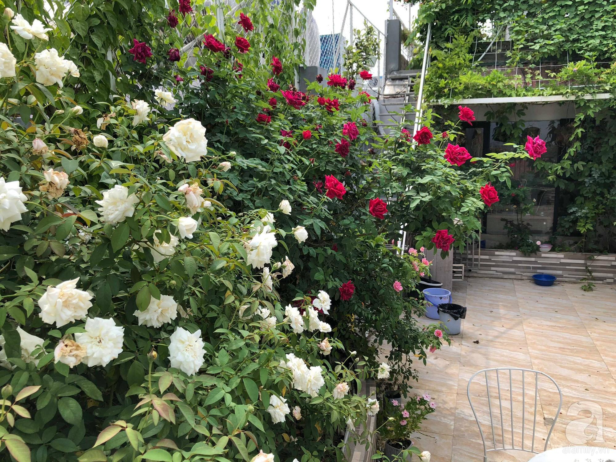 Khu vườn trên sân thượng rộng 200m² đẹp ngỡ ngàng với trăm loài hoa đua nhau khoe sắc ở Hà Nội - 28
