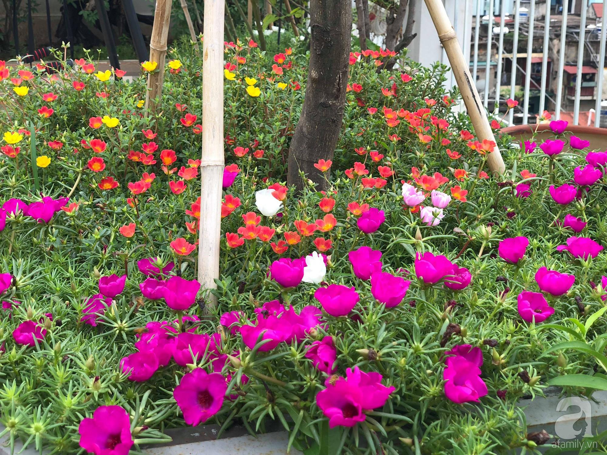 Khu vườn trên sân thượng rộng 200m² đẹp ngỡ ngàng với trăm loài hoa đua nhau khoe sắc ở Hà Nội - 29