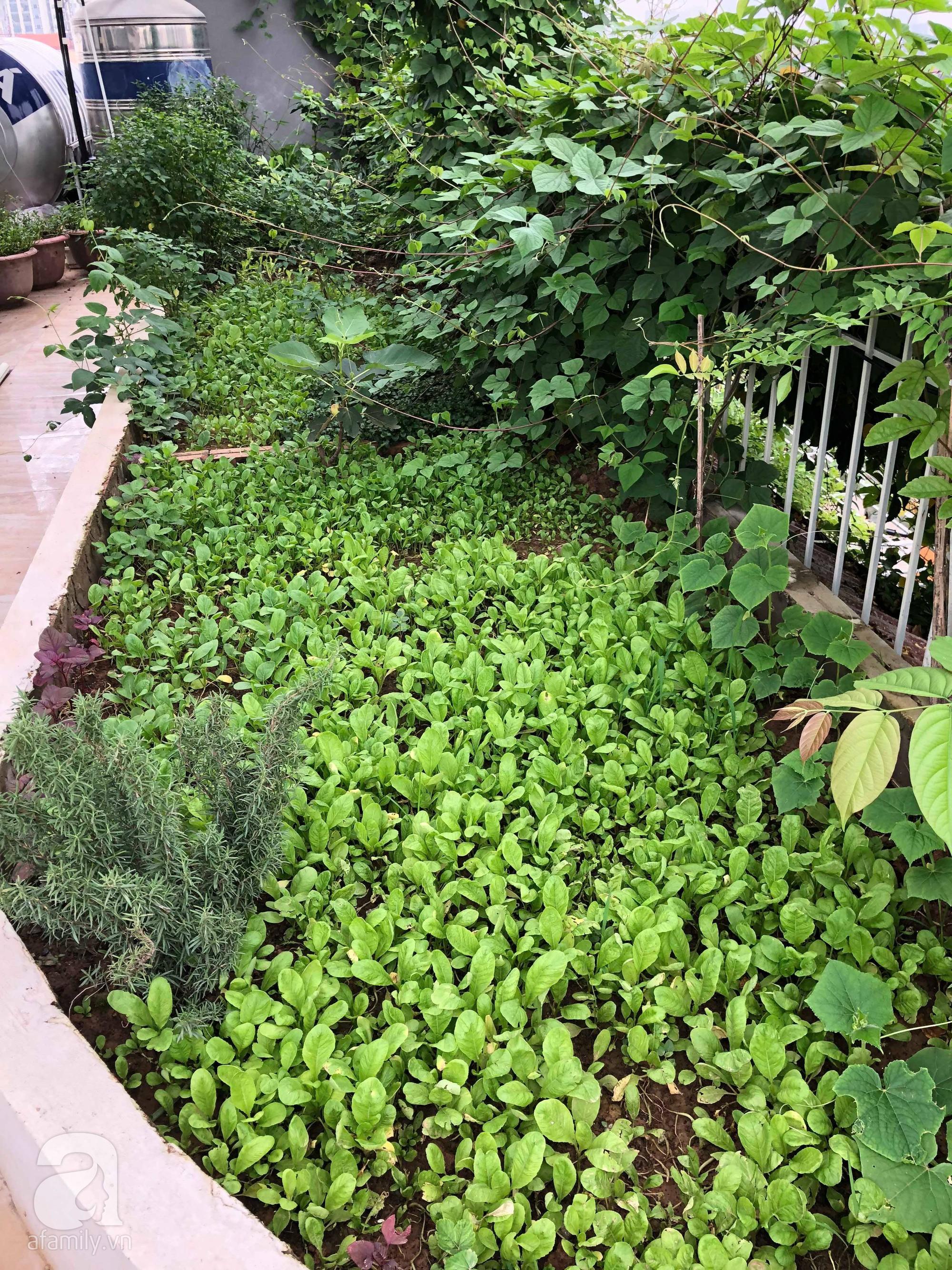 Khu vườn trên sân thượng rộng 200m² đẹp ngỡ ngàng với trăm loài hoa đua nhau khoe sắc ở Hà Nội - 31