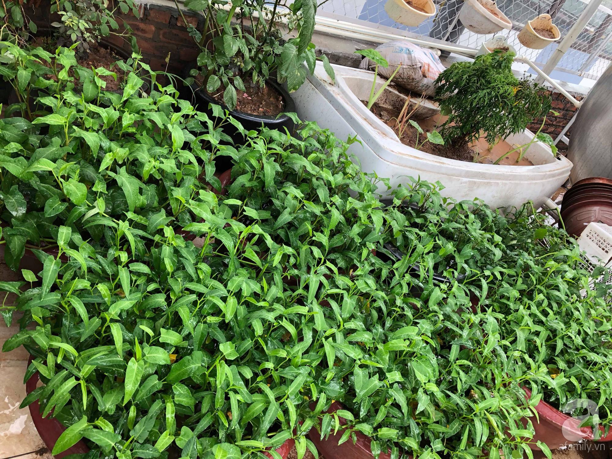 Khu vườn trên sân thượng rộng 200m² đẹp ngỡ ngàng với trăm loài hoa đua nhau khoe sắc ở Hà Nội - 32