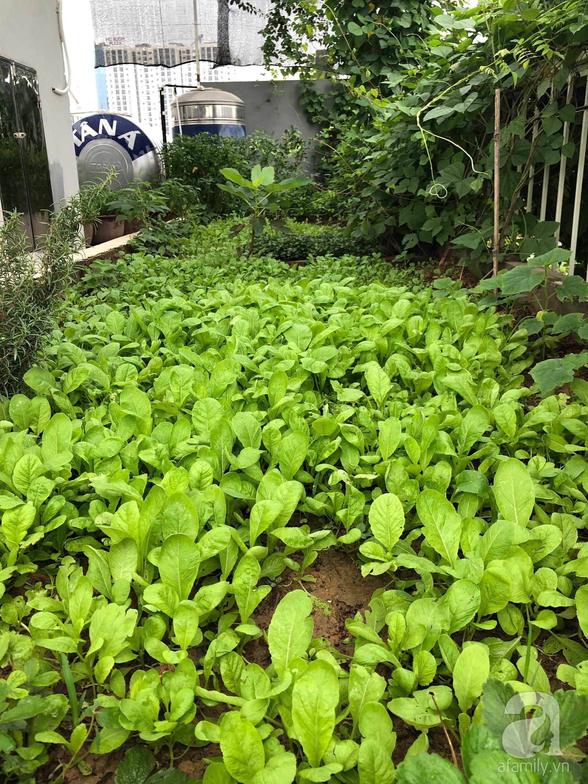 Khu vườn trên sân thượng rộng 200m² đẹp ngỡ ngàng với trăm loài hoa đua nhau khoe sắc ở Hà Nội - 33