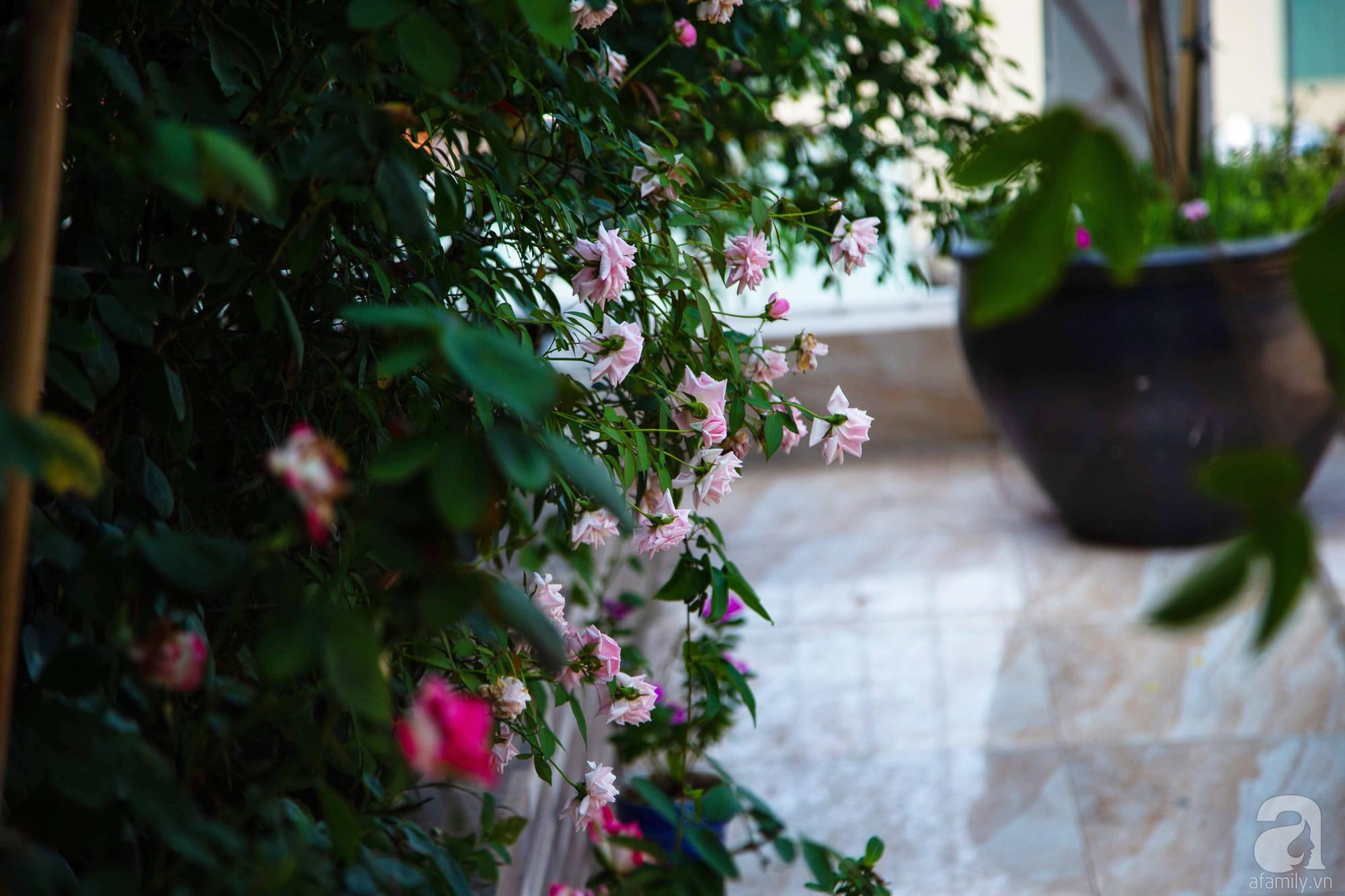 Khu vườn trên sân thượng rộng 200m² đẹp ngỡ ngàng với trăm loài hoa đua nhau khoe sắc ở Hà Nội - 5
