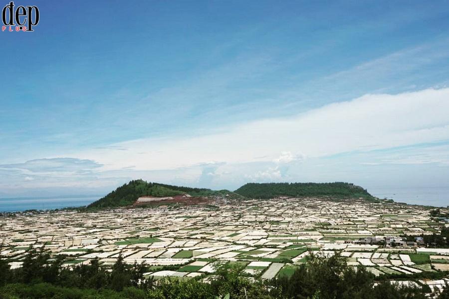 Ngỡ ngàng trước vẻ đẹp xanh mát của cánh đồng tỏi Lý Sơn
