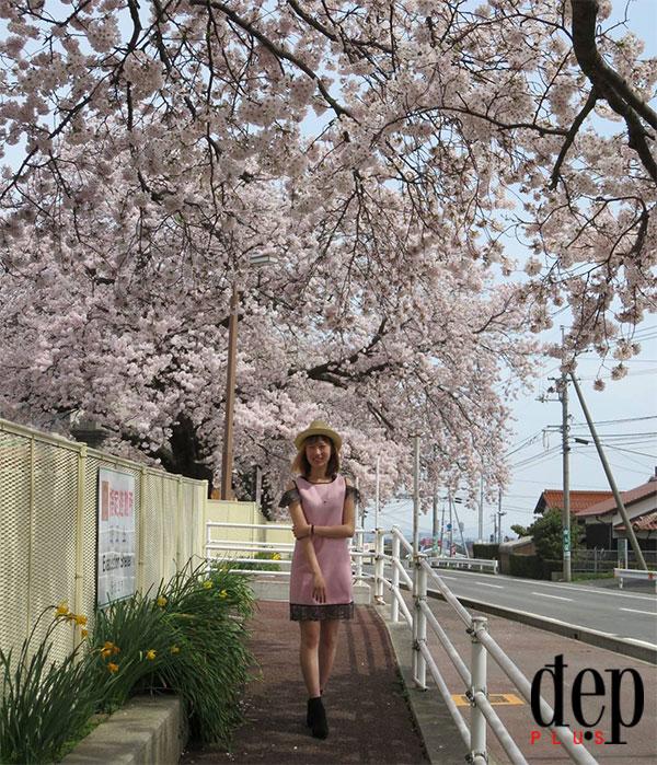 Cuối tuần này, hãy xách balo lên và đến Điện Biên ngắm hoa anh đào Nhật Bản bung nở