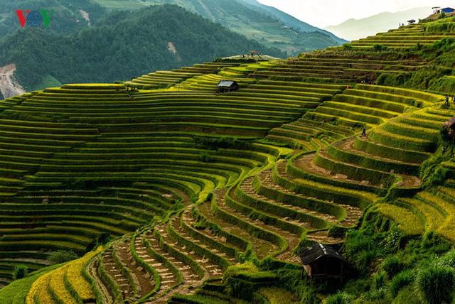 Ngắm đồi mâm xôi đẹp nổi tiếng trong mùa vàng Mù Cang Chải