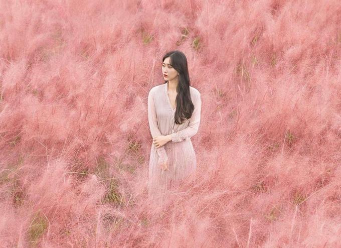 Cánh đồng cỏ hồng ở Hàn Quốc khiến Thúy Vân mê mẩn sống ảo