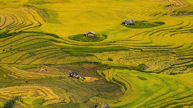 Y Tý mùa vàng - thắng cảnh ngoạn mục đất trời Tây Bắc mỗi độ Thu sang