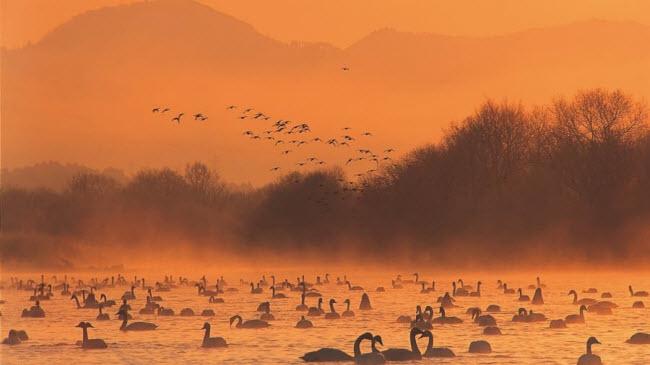 Mướt mắt trước những vùng đất đẹp như ảo ảnh tại đất nước mặt trời mọc - 17