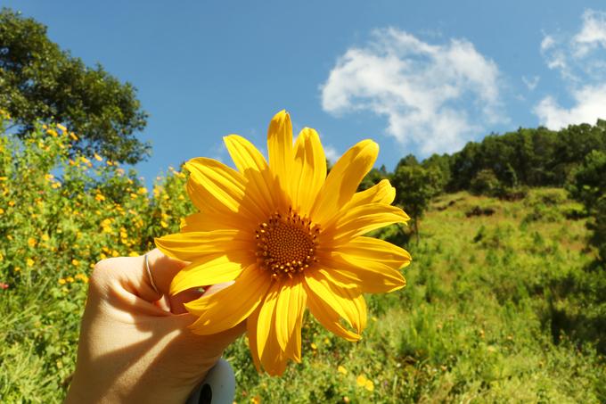 Sắc hoa dã quỳ vàng rực phủ khắp các cung đường Đà Lạt - 4
