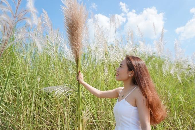 Cánh đồng bạt ngàn cỏ lau trắng giữa sông Trà Khúc - 1
